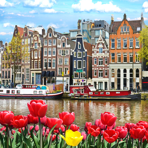 Tulips on Amsterdam Canal